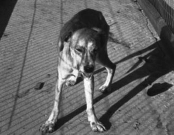 0708 anjing3