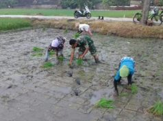 babinsa bantu petani