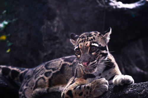 harimau macan pexels photo 2499900