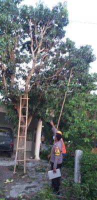 Rapikan Ranting Pohon Mangga, Sumardi Warga Kebakramat Karanganyar Tewas di Atas Pohon Kesetrum Listrik
