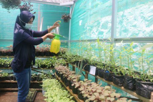 Peduli Lingkungan, PT PII Laksanakan Urban Farming